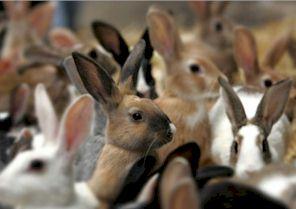 Drinknippels voor konijnen
